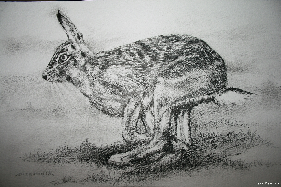 hare-at-schoolhouse1